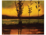Sunset Glow Prints by Judith D'Agostino