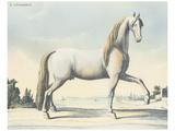 Horse L'Andaloux Prints