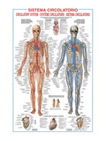 Circulatory System Prints by Libero Patrignani