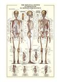 The Skeletal System Prints