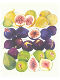 Figs and Dates Prints