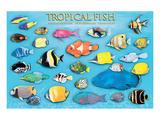 Pesci tropicali Stampe