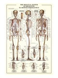 The Skeletal System Prints