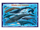 Whales and Dolphins for Kids Posters