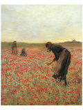 Girls in Poppy Field Prints by Lawren Morris
