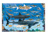 Sharks for Kids Prints
