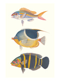 Tropical Fish III Posters
