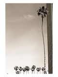 Tall Palm Prints by Shane Settle