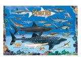 Sharks for Kids Poster