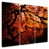 Fire Breather: Japanese Tree 3 piece gallery-wrapped canvas Prints by John Black