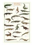 Crocodiles and Alligators Posters