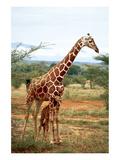 Giraffe and Baby Kunst