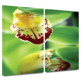 Cymbidium Sea Foam Emerald Orchid 2 piece gallery-wrapped canvas Art by Kathy Yates
