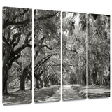 Live Oak Avenue 4 piece gallery-wrapped canvas Posters by Steve Ainsworth