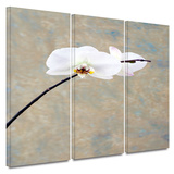 Orchid Blossom 3 piece gallery-wrapped canvas Posters by Elena Ray