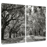 Live Oak Avenue 2 piece gallery-wrapped canvas Prints by Steve Ainsworth