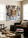 Bengal Tiger Eyes Wall Mural by C. McNemar