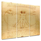 Vitruvian Man 3 piece gallery-wrapped canvas Prints by Leonardo DaVinci