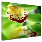 Cymbidium Sea Foam Emerald Orchid 3 piece gallery-wrapped canvas Poster by Kathy Yates