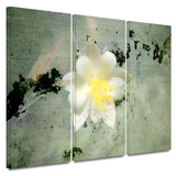 Urban Attitude 3 piece gallery-wrapped canvas Print by Mark Ross