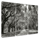 Live Oak Avenue 3 piece gallery-wrapped canvas Posters by Steve Ainsworth