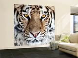 Bengal Tiger Eyes Wall Mural – Large by C. McNemar