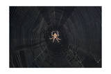 Spider Web Photographic Print by Henri Silberman