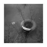 Tree in Tire and Leaf Photographic Print by Henri Silberman