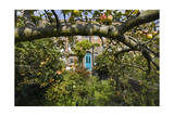 Garden with Apple Tree and Blue Door Photographic Print by Henri Silberman