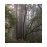 Trees in Fog 1 Photographic Print by Henri Silberman