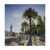 Palm Trees the Embarcadero San Francisco Photographic Print by Henri Silberman
