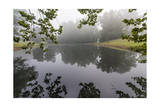 Trees and Branches Reflecting in a Pond on a Foggy Morning Photographic Print by Henri Silberman