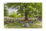 Spring on the Grass under Trees Photographic Print by Henri Silberman