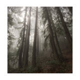 Trees in Fog 2 Photographic Print by Henri Silberman