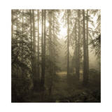 Trees in Fog 4 Photographic Print by Henri Silberman