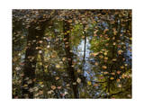 Leaves and Tree Reflections in a Pond Photographic Print by Henri Silberman