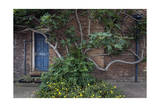 Fig Tree Against Brick Wall Blue Door Photographic Print by Henri Silberman