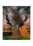 Félix Vallotton - The Old Olive Tree Digitálně vytištěná reprodukce