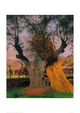 The Old Olive Tree Giclee Print by Félix Vallotton