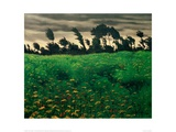 The Blooming Field Giclée-Druck von Félix Vallotton