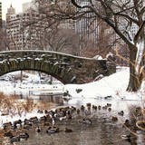 The Gapstow Bridge of Central Park in Winter, Manhattan in New York City Photographic Print by Philippe Hugonnard