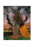 The Old Olive Tree Lámina giclée por Félix Vallotton