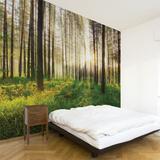 Sunbeam Wall Decal Wall Decal