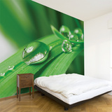 Pure Wall Decal Wall Decal