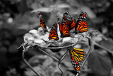 Butterflies at the Bronx Zoo NYC Poster Print