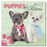 Puppies and Kittens 2015 Wall Calendar Calendars