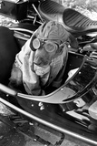 Dog in Motorcycle Sidecar Close-Up Poster Photo