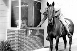 Horse in Bank Drive Through Poster Photo