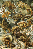 Lacertilia Nature by Ernst Haeckel Posters