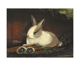 The Dutch Rabbit Photographic Print by Diane Strain